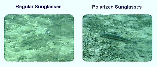 Polarized Bifocal Fishing Sunglasses  polarized lenses replacementlenpress com